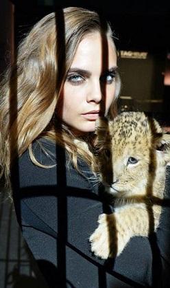 Cara'nın başı aslanlarla dertte!