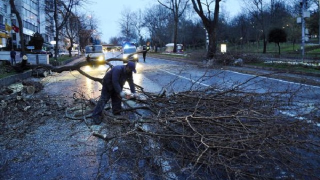 Beşiktaş'ta ağaç devrildi yol kapandı