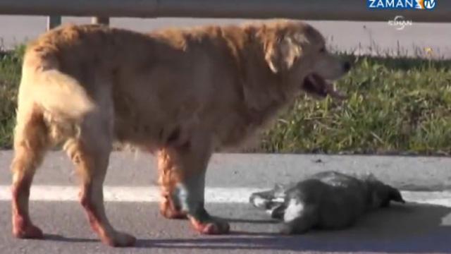 Ölen arkadaşının başında ayrılmayan köpek!