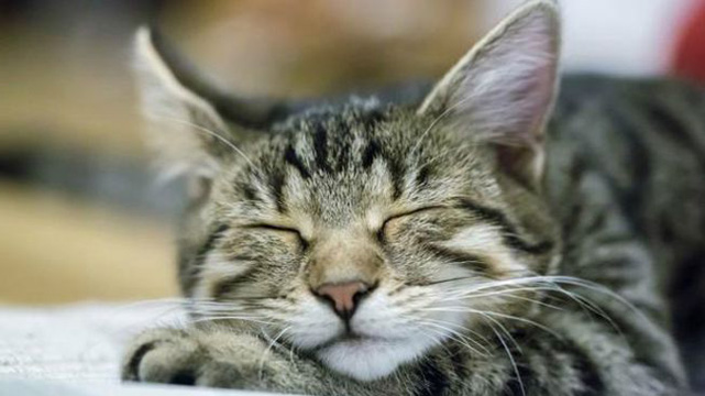 Hayvanlar rüyalarında ne görüyorlar?