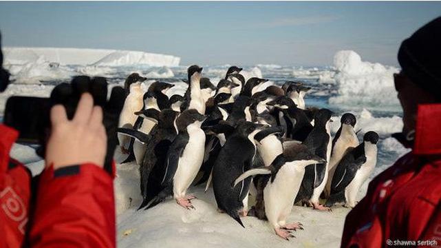 Antarktika'da kameraya gülümseyen penguenler
