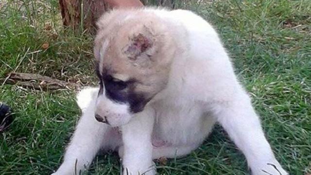 Yavru köpeğe yürek sızlatan işkence