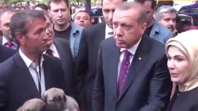 Köpekle ilgili verilen bilgiler Erdoğan'ı şaşırttı
